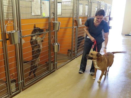 PAWS Adoptions Valentails