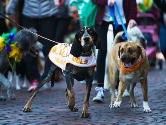 University of Tennessee's Smokey joins other dogs and their owners in Young-Williams Animal Center's 10th annual Mardi Growl parade in 2017.
