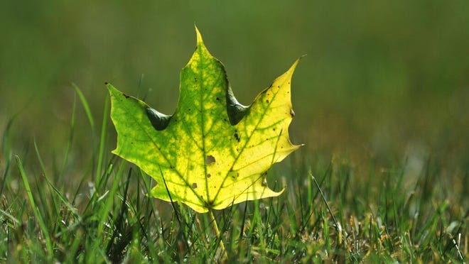BARNSTABLE -- The beginning of foliage season and leaf raking begins as autumn arrives at 9:30 am Tuesday.