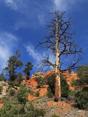 A mixture of rock and trees make the Pink Ledges Trail at Red Canyon a fascinating route to explore.