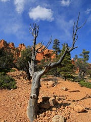 The Photo Trail at Red Canyon provides quick access to excellent views.