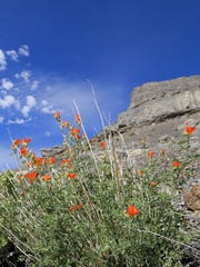 Wildflowers eek out a living in the rugged cliffs near Wendover.