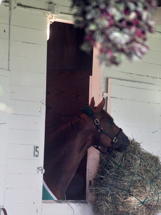 California Chrome_16.JPG