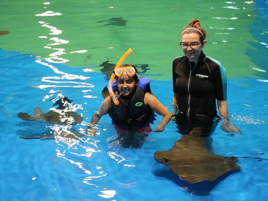 Swimming with stingrays is a popular attraction at