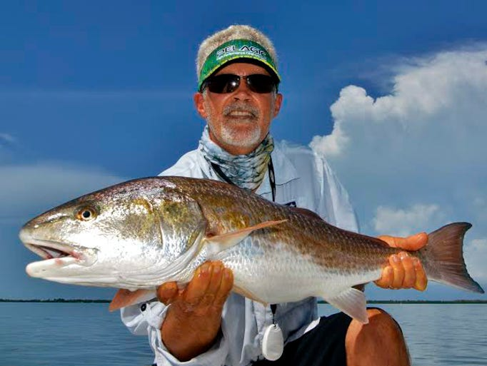 Wild Fly Charters Capt. Gregg McKee reports seeing schools of as many as 100 redfish like this 30-incher released by Tim Gleason. It took a white Gulp! Shrimp near Cabbage Key in Pine Island Sound.