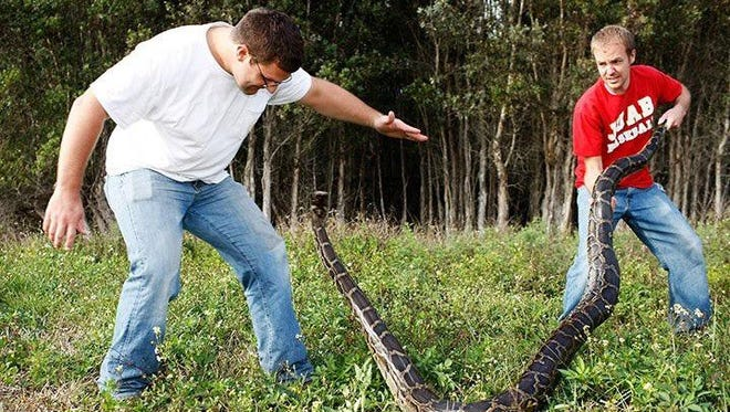 Devin Belliston and Blake Russ are shown capturing a Burmese python during the 2013 state-sponsored hunt in South Florida. They won prizes for the longest python and the highest number captured. They'll be one of the teams to beat in the 2016 Python Challenge starting in January.