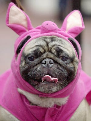 Sixteen percent of consumers will dress their pet this Halloween, the NRF reports.