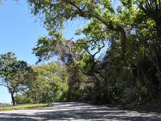 The Brevard County owned land along the entrance to Jetty park includes a waking and bicycling trail.