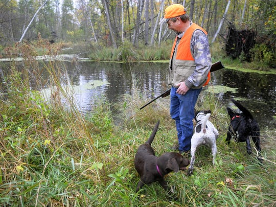 Sand Pine Pheasants owner Keith Sand works with, from left, Rio, a chocolate Lab; Bam-Bam, a German shorthair; and Cane, a black Lab. The dogs explored a pond on the preserve. Each field on the preserve has a pond and a kiddie pool where dogs can cool off.