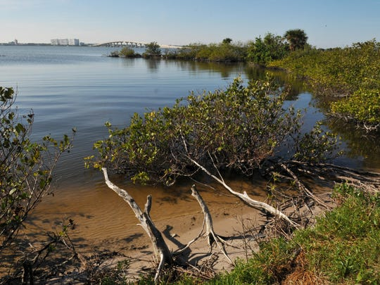 Mangroves east of Titusville along the Indian River Lagoon.