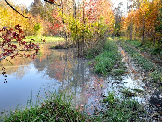 Wetlands absorb flood waters and protect against storm surges by acting as sponges and absorbing excess water.