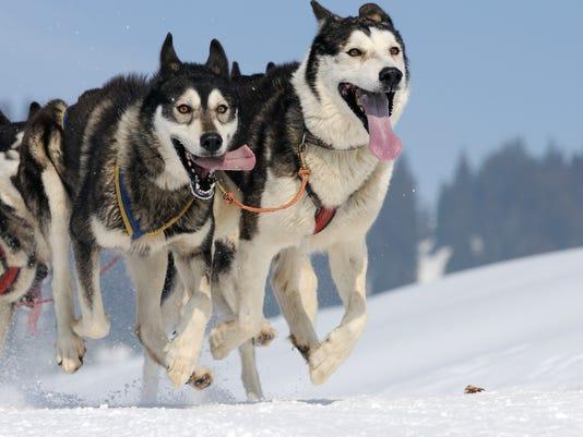 snl DogsOne.jpg