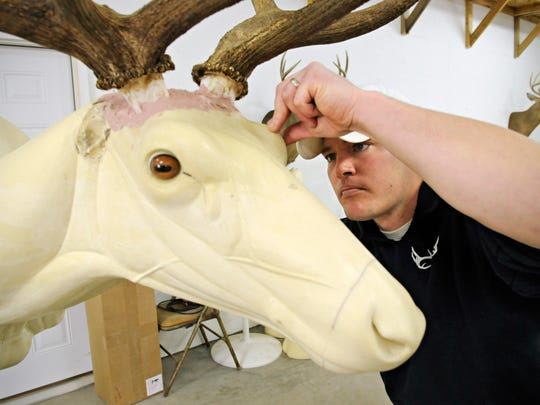 Taxidermist Adam Zwick, Fur Fins & Feathers Taxidermy, Sauk Rapids, uses clay to form the eyelid and positions a glass eye into just the right position on an elk form.