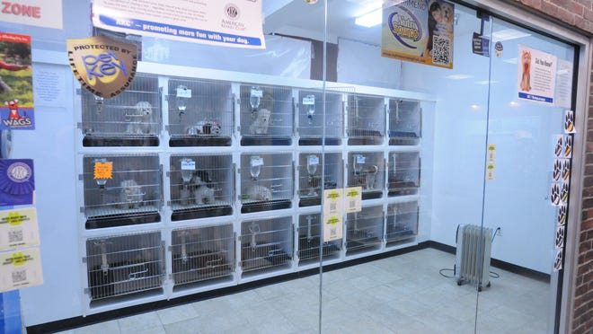 In this file photo, puppies are pictured in cages at The Pet Zone in the Poughkeepsie Galleria.