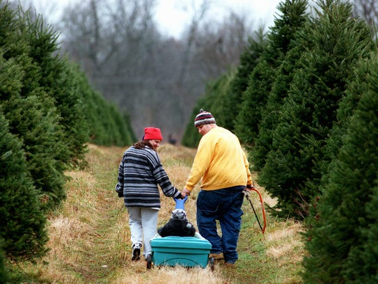 A family heads out to pick a Christmas tree at one