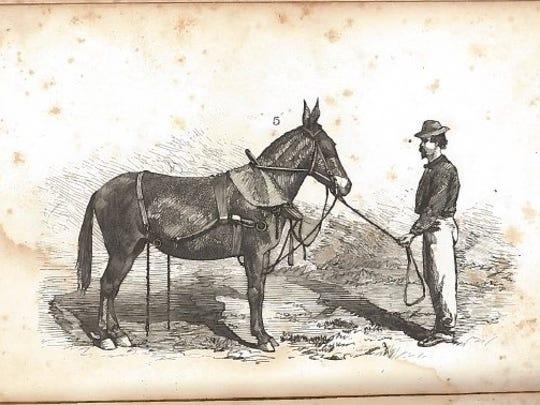 Image depicts a hostler.