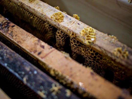 Honeycomb is displayed at the Pine River Beekeeping