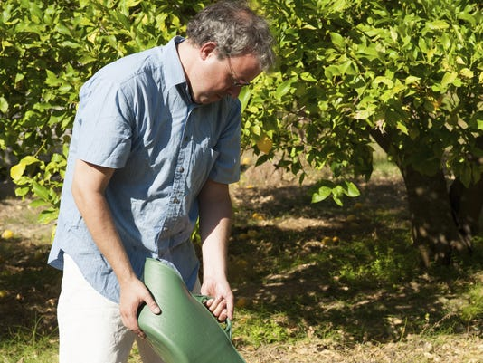 Tree fertilizer