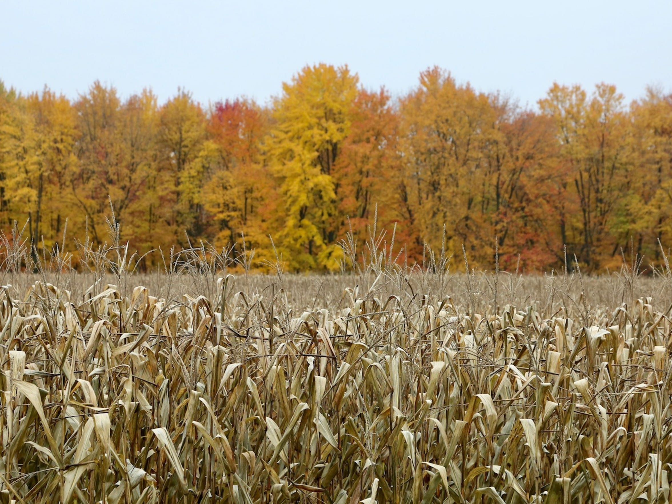 The leaves were turning near Humbird, Wis.