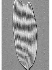 Example of a 201-million- year-old serrated hollow