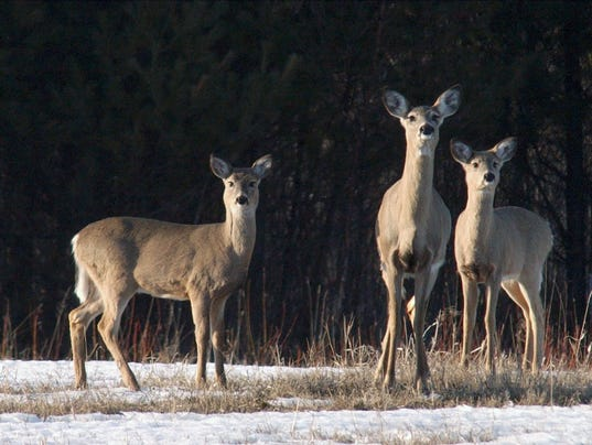 deer file photo AP