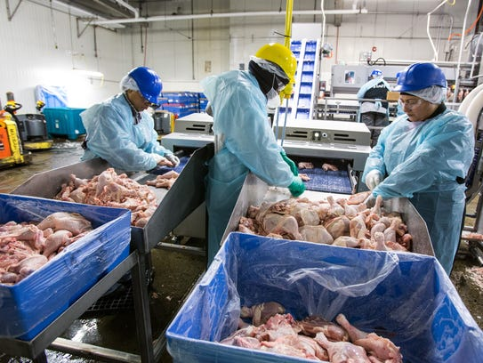 Workers sort chicken legs into left and right legs