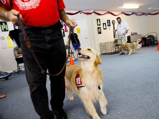 Ray Dillman, left, and Marty Monkiewicz, right, walk with their future PAWS assistance dogs Hope and Que, respectively, during training at the PAWS facility Thursday, July 2, 2016 in Naples, Fla. Starting from eight weeks old PAWS Assistance Dogs of Naples works to train Golden Retrievers into loyal service and companion dogs for veterans as well as children with physical and developmental disabilities.