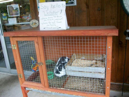 """Webster the rabbit is a favorite at Schutt's Apple Mill. """"Through the years, we've always had a rabbit,"""" said Ryan Schutt, the fourth generation of his family to work at the mill."""