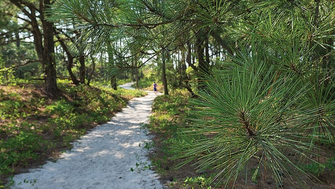 A pathway to the Chesapeake Bay on Virginia's Eastern Shore