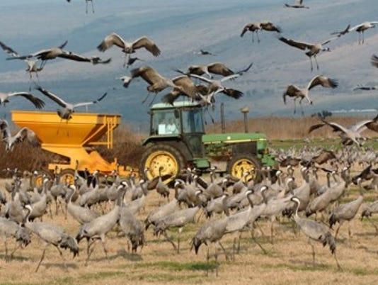636486956089057056-crane-tractor-photo.jpg