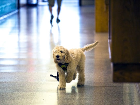 Henry runs down the hall to greet students at Ben Franklin