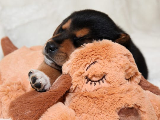 Comfort your new best friend with a Snuggle Puppy.