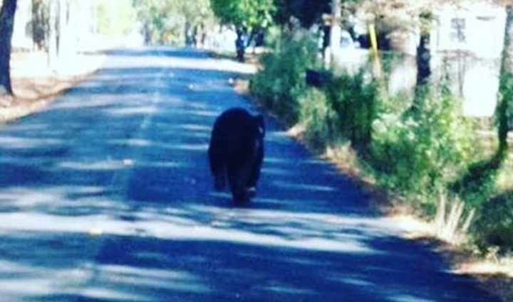 Photo posted by Benton police on Instagram: Just spotted