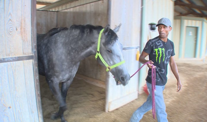 Horse trainer at Retama