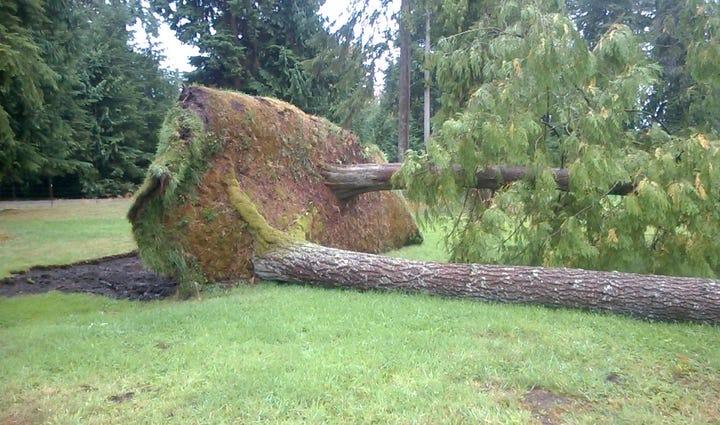 Stanwood wind damage.