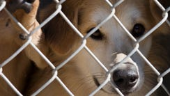 Maricopa County says its shelters  are full with animals