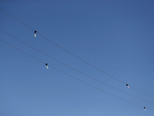 Bird diverters hang from power lines on Civic Center