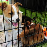 Southern Pines Animal Shelter is hoping to adopts all of its available dogs and cats this weekend as the end of the ASPCA Rachael Ray $100K Challenge draws to a close on Sunday. Southern Pines has a goal of saving 1,500 lives by Aug. 31.