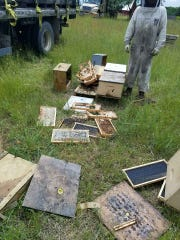 An employee of Hilbert's Honey Bees assesses damage caused by black bears to bee hives at one of the company's bee yards near Gaylord