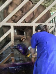 Alison Price, a 2013 graduate of Watkins Memorial High School, spent two weeks in Thailand over the summer working with elephants and shelter dogs on a veterinary service trip.