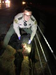 A Poweshiek County deputy sheriff holds a black bear