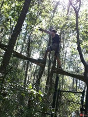 Tallahassee Museum offers Tree to Tree zip lining adventures.