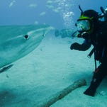 Shark Expert, Greg Skomal, who is one of Shark Week's Finbassadors, comes face to face with a tiger shark off Florida.