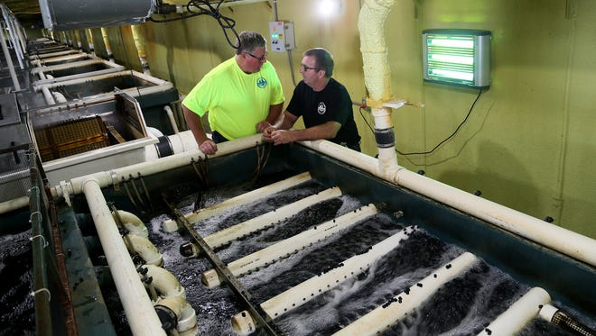 Cousins Jeff, left, and Mark Nelson formed Iowa's First, an aquaculture fish farming operation near Blairsburg in north-central Iowa. They converted an empty hog confinement building to house the fish tanks. After raising striped bass for a few years, Iowa's First is now concentrating on barramundi, a species they are importing as tiny fish from Australia and then growing in the tanks.