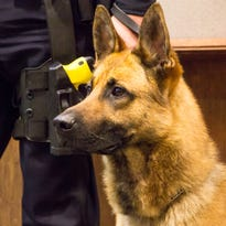 Three new K9s join the Franklin police force