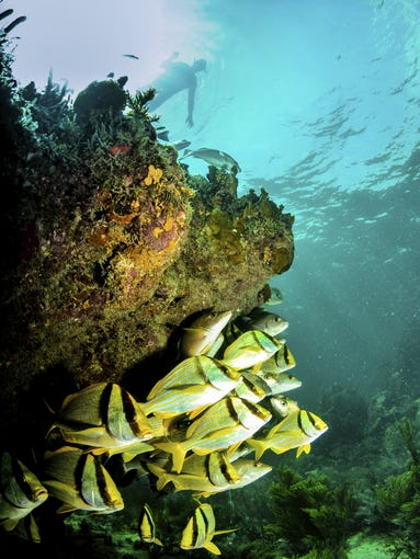 Best Places to Scuba Dive in the Caribbean - Caribbean ...