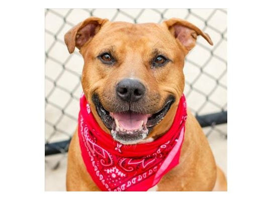 The Des Moines Register and the Animal Rescue League of Iowa are excited to introduce you to Duke!
