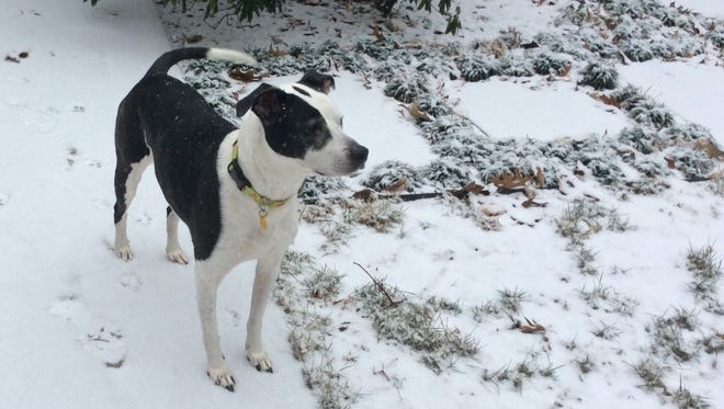 Pet owners can take precautions to keep their pets, such as Lucky the dog, safe during the colder months.