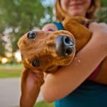 36 Phoenix-area dog parks for you to visit