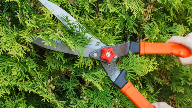 The January People/Plant Connection event will focus on tree trimming and care.
